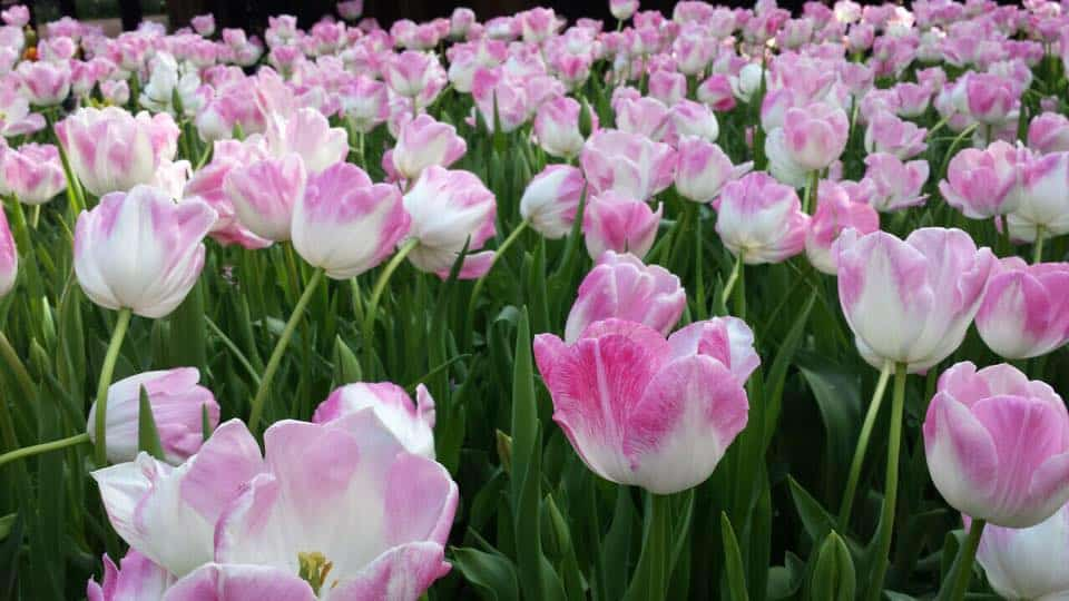 FLEUR DE LIZ FLOWERS SHOP